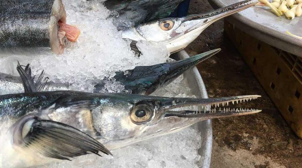 барракуда фукуок рыба