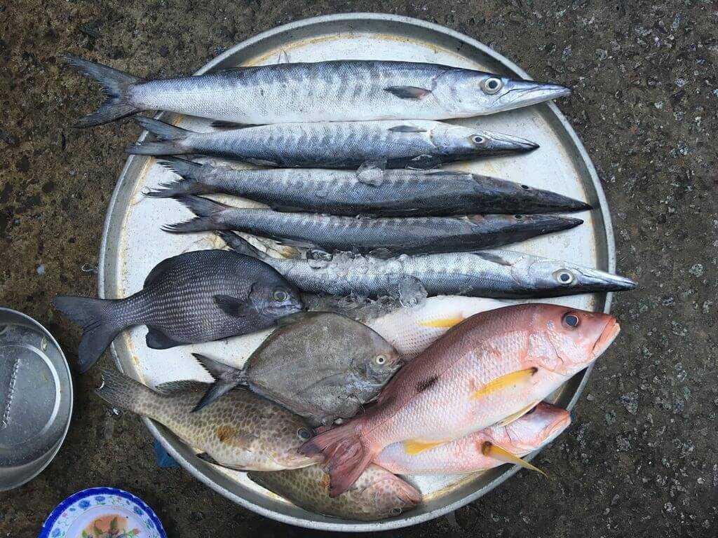 рыба на рынке фукуока