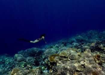 кораллы фукуок
