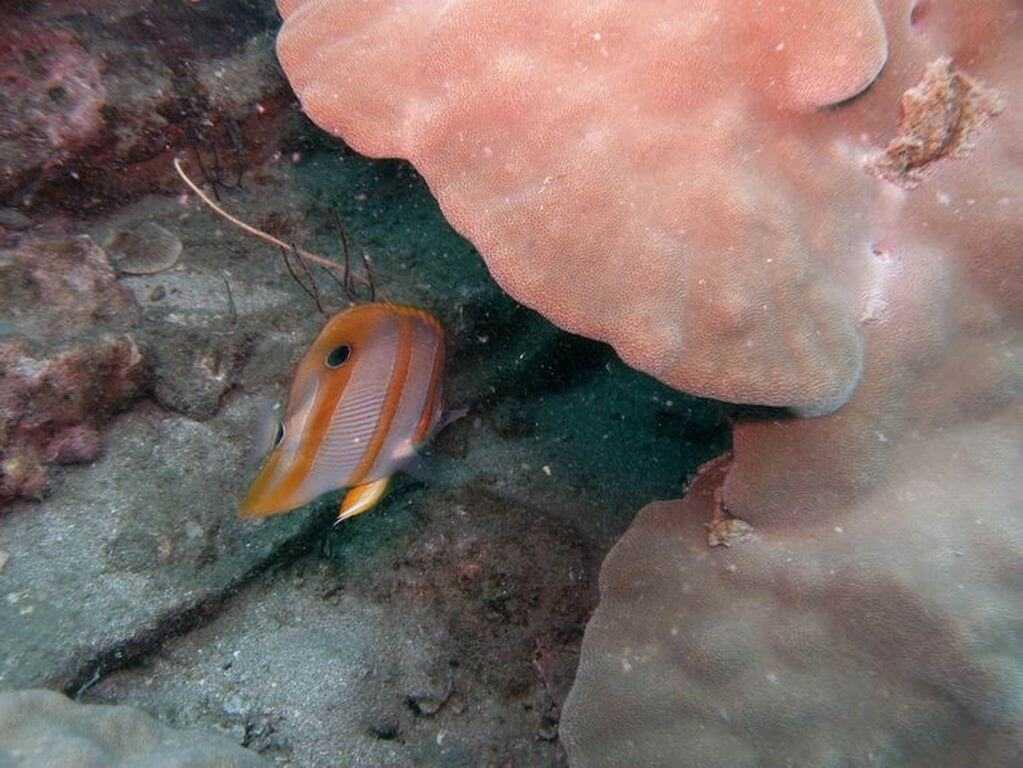 Кораллы на Фукуоке