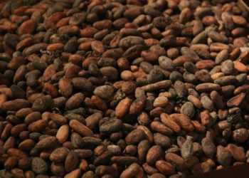 какао фукуок