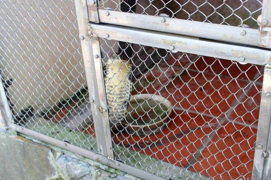 ферма змей фукуок
