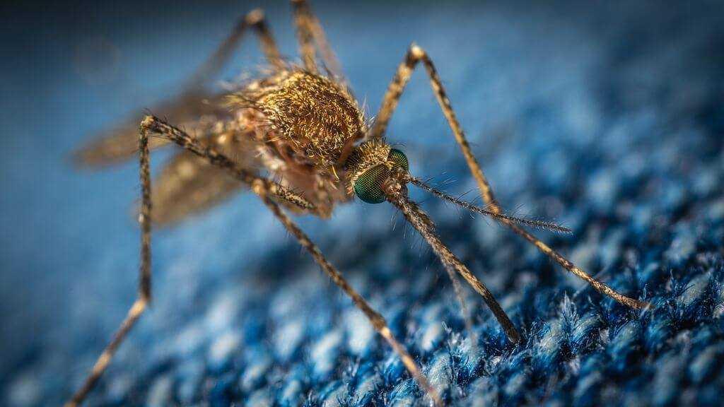 Лихорадка денге Симптомы и лечение новости в ТаиландеВьетнамеКамбодже Что следует знать туристу